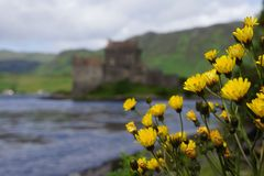 Eilean Donan Castle, Scotland. Eilean Donan Castle in Scotland with yellow flowers Royalty Free Stock Images