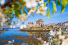 Eilean Donan Castle with spring tree in Highlands of Scotland Royalty Free Stock Photos