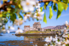 The Eilean Donan Castle with spring tree in Highlands of Scotland Royalty Free Stock Photos
