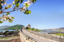 The Eilean Donan Castle with spring tree in Highlands of Scotland. Famous Eilean Donan Castle with spring tree in Highlands of Scotland Stock Photo