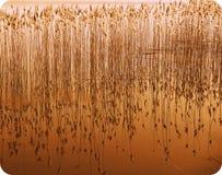 Eilen in einem See 1 Stockbild