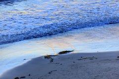 Eilwood Mesa Beach Seaweed Pacific Ocean Goleta la Californie Photographie stock