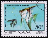 eimekei pterophyllum - το τροπικό angelfish, ενυδρείο αλιεύει serie, circa το 1980 Στοκ Εικόνα