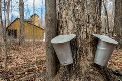 Eimer benutzt, um Saft von Ahornbäumen zu sammeln, um Ahornsirup I zu produzieren Lizenzfreies Stockbild