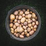 Eimer der Draufsicht der Kartoffeln Stockbild