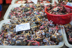 Eimer der Krabbe in einem Markt in Thailand Stockfotografie
