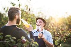 Ein älterer Mann mit dem erwachsenen Sohn, der Flaschen mit Apfelwein im Apfelgarten im Herbst hält lizenzfreie stockfotografie