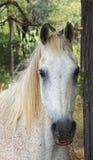 Ein älteres Pferd, das im Wald sich versteckt stockbild