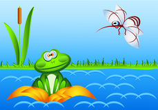 Ein überraschter Frosch sitzt in einer Seerose und betrachtet einen enormen Moskito Lizenzfreies Stockfoto