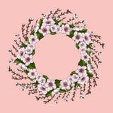 Ein üppiger Kranz von rosa Kirschblumen und von hellgrünen Kirschblättern zusammen mit jungen Weidenniederlassungen Ð-½ Ð?Ñ 'а lizenzfreie abbildung