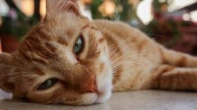 Ein Abschluss oben einer Katze, die auf dem Boden liegt Stockfotos