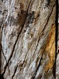 Ein Abschluss oben einer Planke des rauen strukturierten Holzes stockbild