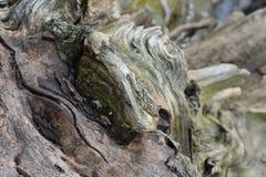 Ein Abschluss oben eines verwitterten Baumstumpfs Stockbild