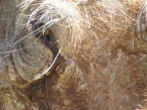 Ein Abschluss oben eines Warzenschweins von der Front Stockfoto