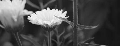Ein Abschluss oben und horizontal längliches Schwarzweiss-Foto von Blumen, von grünen Blättern und von Stämmen lizenzfreies stockbild