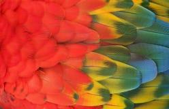 Ein Abschluss oben von einem Macas stockfotografie