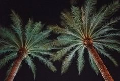 Ein abstraktes Bild von den Palmen belichtet in reflektiertem Licht Lizenzfreies Stockfoto