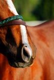 Ein abstraktes Foto des vollblütigen laufenden Pferds Lizenzfreie Stockfotografie