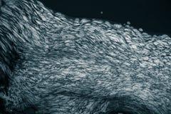 Ein abstraktes Muster von einem schaumbildenden im Fluss Stockbilder