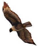 Ein Adler lizenzfreie abbildung