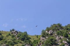 Ein Adler, der über Felsen auf der Suche nach Lebensmittel schwebt Stockbilder