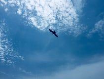 Ein Adler, der auf einem Hintergrund von klaren blauen Himmeln schwebt Stockfotos