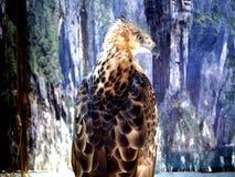 Ein Adler gehockt auf einem Baumast Lizenzfreies Stockbild