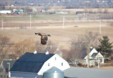 Ein Adler gleitet über Stadt Stockbilder