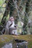 Ein Affe Stockfotografie