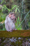 Ein Affe Lizenzfreies Stockbild