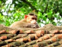 Ein Affe Lizenzfreie Stockfotografie