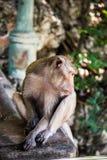 Ein Affe Stockfotos