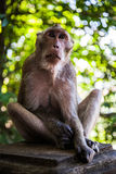 Ein Affe Stockbild