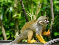 Ein Affe auf Baum im Zoo Lizenzfreie Stockfotografie