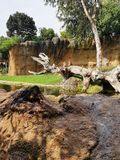 Ein Affe auf dem Baum - Naturhintergrund Stockbild