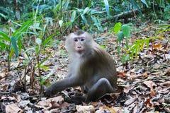 Ein Affe auf dem Gras im Wald Stockbilder