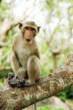 Ein Affe auf dem Klotz Stockbilder