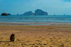 Ein Affe auf dem schönen Strand AO Nang, Krabi, Thailand Lizenzfreies Stockbild