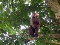 Ein Affe auf einem Baum Lizenzfreies Stockfoto