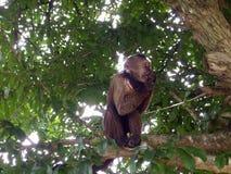 Ein Affe auf einem Baum Stockfoto