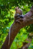Ein Affe auf einem Baum in Thailand Lizenzfreie Stockfotos