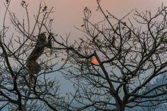 Ein Affe auf einem Baum und einer roten Sonne Lizenzfreie Stockfotos