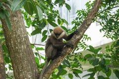 Ein Affe auf einem Baumast Stockbilder