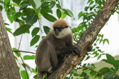 Ein Affe auf einem Baumast Lizenzfreie Stockfotografie