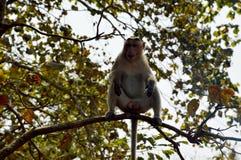 Ein Affe, der auf Baum im Wald sitzt Stockfotos