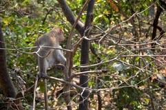 Ein Affe, der auf Baum im Wald sitzt Lizenzfreie Stockfotos