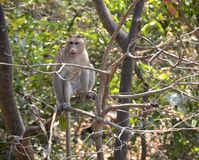 Ein Affe, der auf Baum im Wald sitzt Lizenzfreies Stockbild