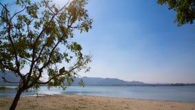 Ein Affe, der auf einem Baum nahe einem See in Jaipur stillsteht Lizenzfreie Stockbilder