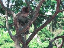 Ein Affe, der auf einem Baum sitzt Klein und süß Lizenzfreie Stockfotografie