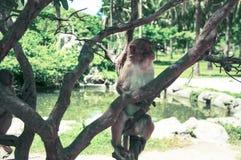 Ein Affe, der auf einem Baum sitzt Klein und süß Lizenzfreie Stockfotos